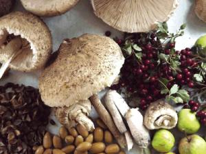 woodland_food